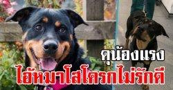 หนุ่มดุสุนัขตัวเอง ด้วยถ้อยคำหยาบคาย เจอโทษห้ามเลี้ยงสัตว์ 5 ปี