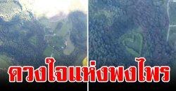 กู้ภัยขึ้น ฮ. บินผ่านป่า พบต้นไม้ขึ้นเป็นรูปหัวใจ ก่อนทราบที่มาสุดเศร้าเคล้าน้ำตา
